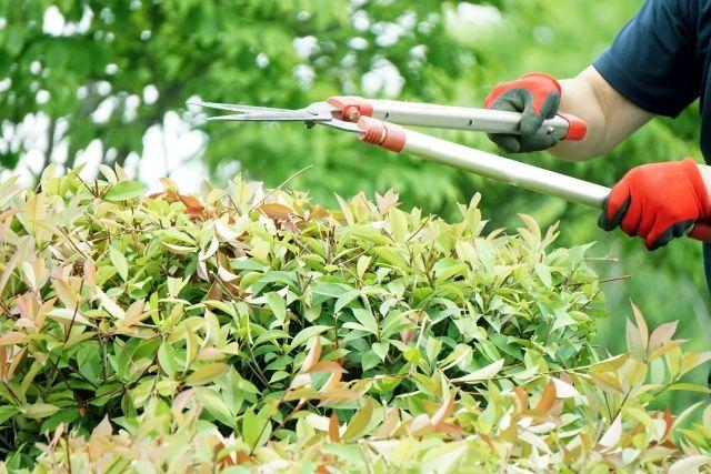 庭の木をカットする業者